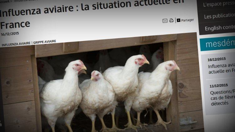 Bird flu south west France