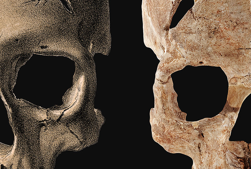 Marking the discovery of Cro-Magnon man 150 years ago