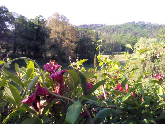 Flowers and the valley in sunshine