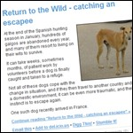Escaped dog